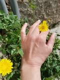 Dandelion into a woman fingers