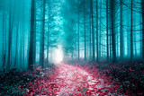 Artistic colored misty forest road.