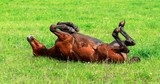 horse on the green grass