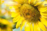 Bee suck sweet liquid nectar pollen from flowers