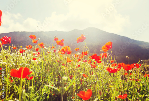 Leinwanddruck Bild Poppy