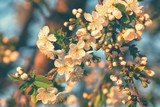 Cherry blossom, spring outdoor background