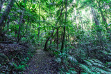 Walking trail in a cool eucalypt forest of Springbrook National Park, Queensland, Australia - 250183570