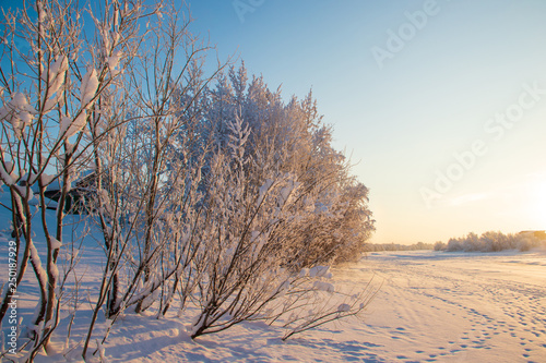 obraz lub plakat Arkhangelsk region. Winter in the vicinity of the village Levkovka.