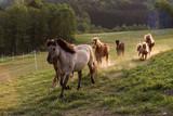 Pferde reiten in ihrem Gehege