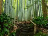 Fototapeta Sypialnia - Bambus Hintergrund Weg Ruhe Meditation © prempict