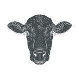 Cow's head isolated illustration.