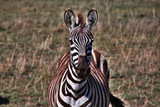 Tanzania Kenia Safari