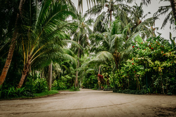 Palm leaves.Tropical Forest on the island in indian ocean.Beautiful landscape of humid tropical jungle .Picture of a tropical forest