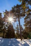 Fototapeta Na ścianę - A sunny day in the forest © Kurt Rabe