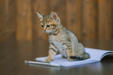 Back to school. Cute kitten and notebook.