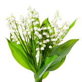 Bouquet of lily of the valley on a white   background