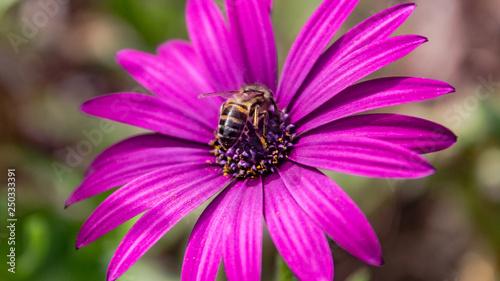 fleure - 250333391