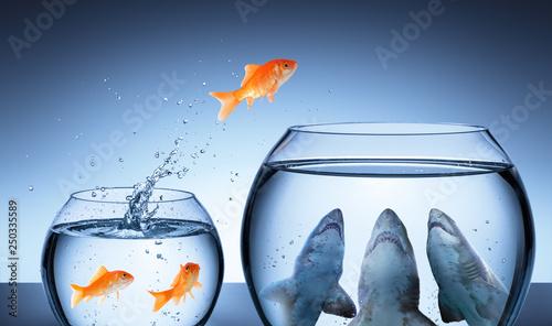 Shark Trap - Business Risk Concept - Goldfish Jumping In Shark Tank