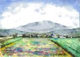 レンゲ畑風景画2