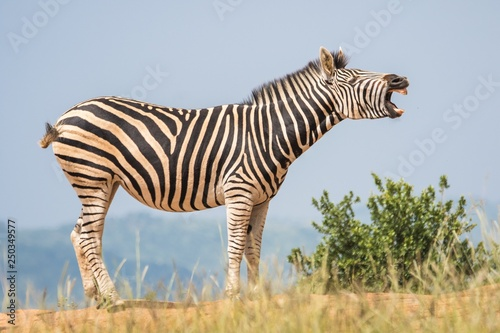 Wildlife and wild animals. - 250349577