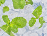 Fresh mint leaves lie on ice cubes. Preparation of cocktails. Concept purity and freshness . - 250385754