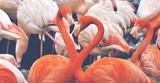 Flamingos Pink Rosa Tiere