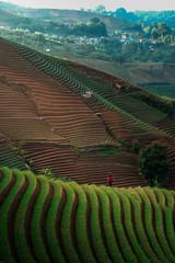 Green line pattern plantation landscape terracing of Argapura Majalengka © Budi Rahardi