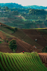 Green line pattern plantation landscape terracing of Argapura Majalengka © Budi Rahardi