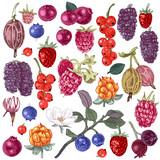Set of hand drawn berries - 250406506