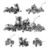 Black and white designs with hand drawn berries - 250407954