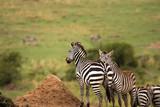The overwatch of zebra hill