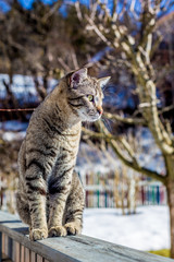 Portrait of a domestic cat in winter outdoors © mmphoto