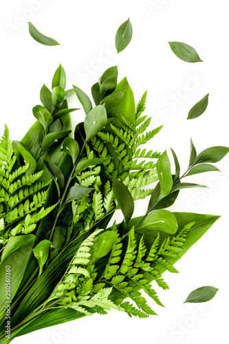 mata magnetyczna Spring background with young green plants and leaves on white background top view pattern