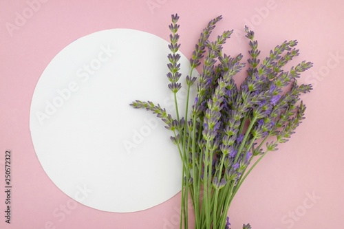 lavender flower bouquet and white  round plate on a pink background.top view, copy space. - 250572322