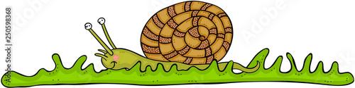 Cute snail on green grass © socris79