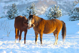two horses tenderness together in winter