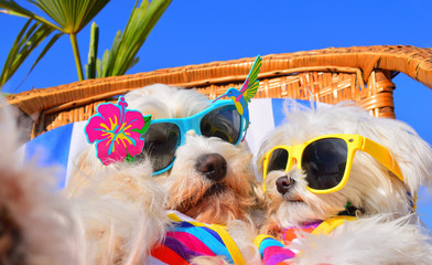 funny dog with sunglasses © Natallia Vintsik