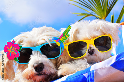 Leinwanddruck Bild funny dogs with sunglasses
