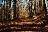 Wanderweg X16 Lulluspfad