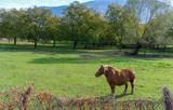 Pony en los alpes franceses