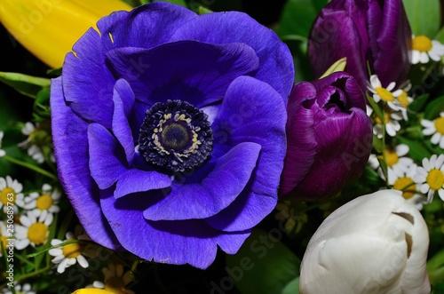 Blumen - 250689763