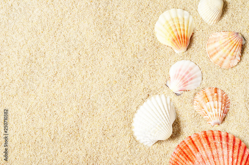 Leinwanddruck Bild Sea shells on sandy beach. Summer background. Top view