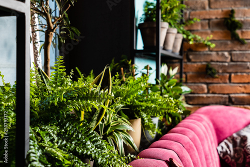 stylish interior filled a lot of plants. Space of nature lover