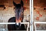 pferd im gatter