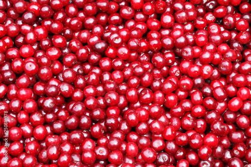 obraz lub plakat cherry