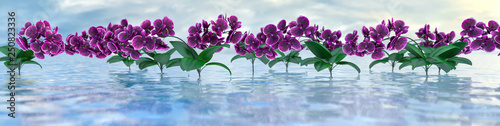 panorama of purple orchids over the water surface with reflections, 3d illustration - 250823336