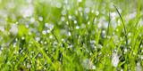 sparkling grass