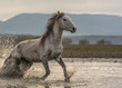 the old horses run out of lake, freedom
