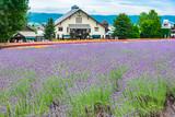 北海道富良野の縞模様の花畑ガーデン