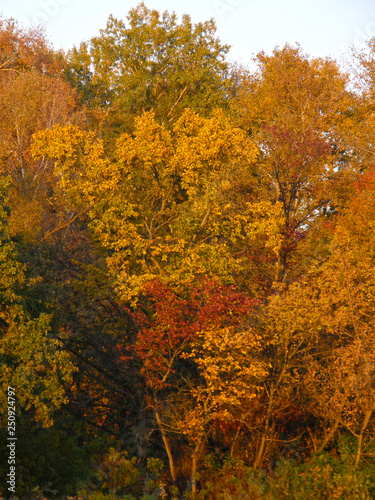 mata magnetyczna autumn leaves on tree