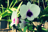 Orchids flower and green leaves