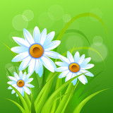 Spring time. Chamomile.Handwritten calligraphy lettering with grass background. Vector image.