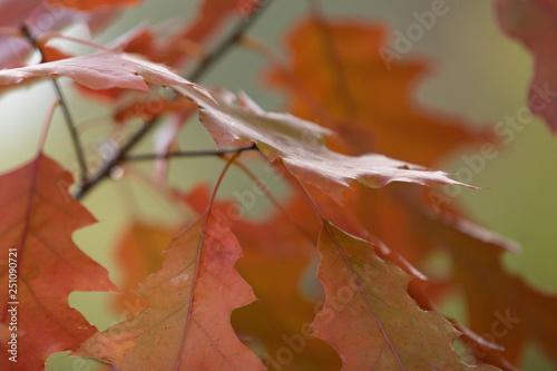 mata magnetyczna autumn leaves