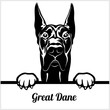 Great Dane - Peeking Dogs - - breed face head isolated on white